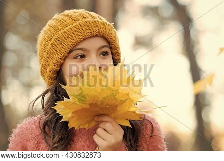 Smiling Teen Kid In Knitted Hat And Sweater Hold Yellow Maple Leaves In Forest Of Park In Autumn Sea