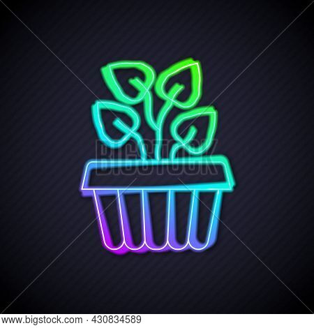 Glowing Neon Line Indoor Plant Ivy In A Pot Icon Isolated On Black Background. Branch With Leaves. V