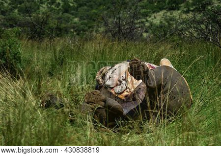 A Dead Poached Rhinoceros In Pilanesberg National Park South Africa