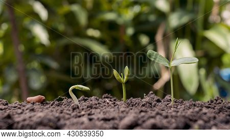 Presentation Of Plant Germination Sequence And Plant Growth Concept In Suitable External Environment