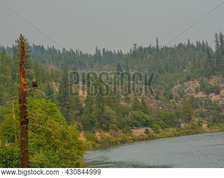A Bald Eagle Watching For Fish In The Wilderness Lake Below. Located In Jackson County, Oregon