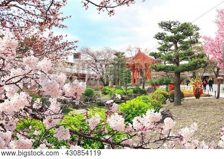 Cherry blossoming season in Japan. Decorative pond and blooming sakura trees in garden near to Main Hall of Sanjusangendo (Rengeo-in) Buddhist Temple in Kyoto, Japan