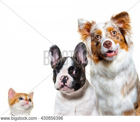 Puppy and kitten together, looking at the camera, dog and cat, isolated on white