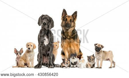 Cats and dogs Group in a row, isolated
