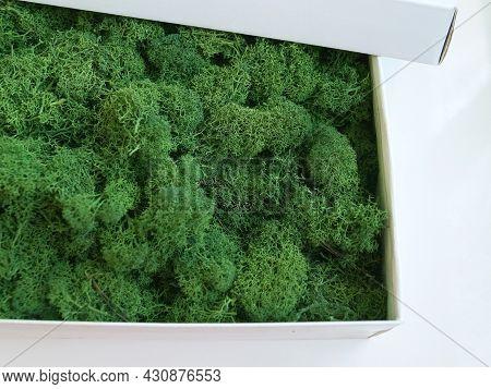 Green Decorative Stabilized Moss In An Open Cardboard Box