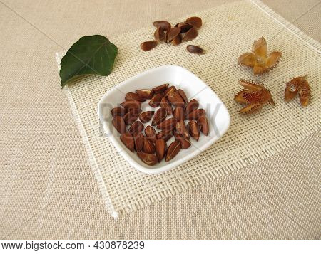 Shelled Beech Nuts In A Small Bowl