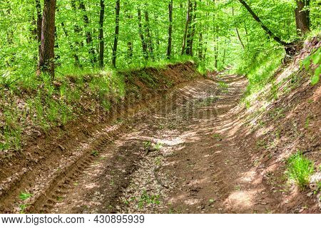 Dirty Road In The Forest . Path In The Spring Woodland