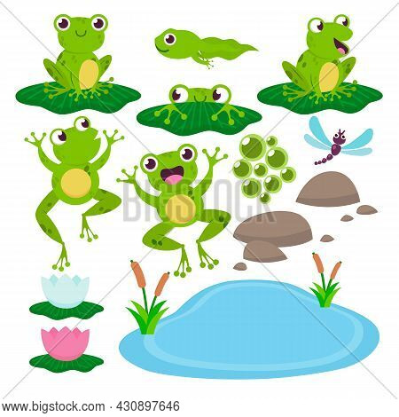 Set Of Cute Drawing Frogs. Cartoon Vector Illustration. Green Croaking And Jumping Toads, Stones, Lo
