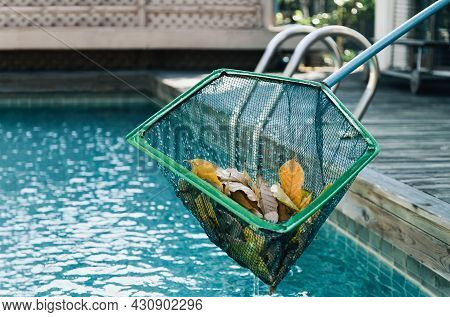 Cleaning Swimming Pool Of Fall Leaves With Skimmer.