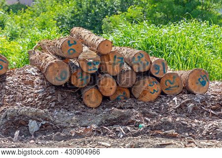 Timber Wood Logs With Numbers For Lumber Industry