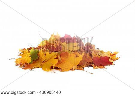 Vibrant fall colors. Pile of autumn colored leaves isolated on white background.A heap of different maple dry leaf .Red, yellow, orange and green foliage in the fall season