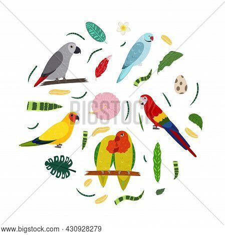 Design Template With Parrots In Circle For Kid Print. Round Composition Of Tropical Birds Lovebirs,