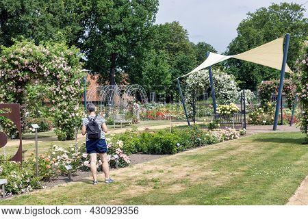 Lottum, The Netherlands - June 19, 2021: Woman Wondering Beautiful Roses In Public Garden