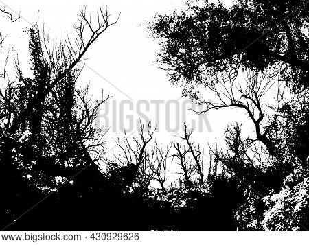 Thicket Of Forest With Tall Old Deciduous Trees, Bushes And Dead Wood. Silhouettes Isolated On White