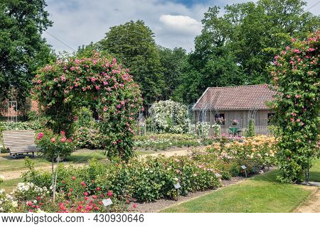 Dutch Rose Garden With Pathway, Wooden Bench, Shed And Pergola