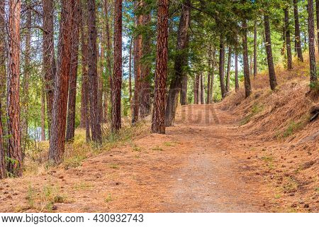 Trail in park at summer day in Vancouver, Canada, North America. Day time on May 2021.