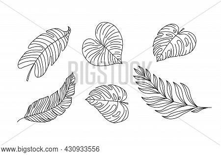 Monoline Vector Drawing Exotic Tropical Leaf Monstera Plant. Printable Decorative Set Houseplant For