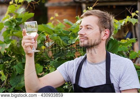 Portrait Of Young Man Winemaker Checking The White Wine Quality On The Vineyard During A Sunset. Sma