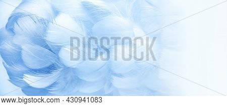 Blue Fluffy Bird Feathers. Beautiful Fog. A Message To The Angel. Banner. The Texture Of Delicate Fe