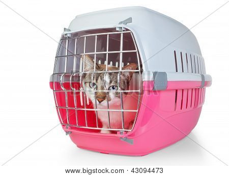 Box with a cat cage for transport. On a white background. poster