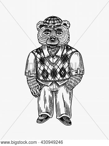 Bear In A Sweater And A Tweed Cap. Argyle Pattern Style Fashion Character. Victorian Gentleman. Vint