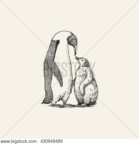 King Or Emperor Penguin Chick. Adult With Juveniles. Animal Moms And Babies. Cute Small Nestling. Ve