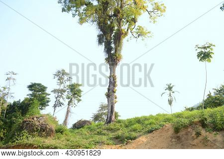Old Tree In The Backyard Of A House - Brazilian - Angra Dos Reis