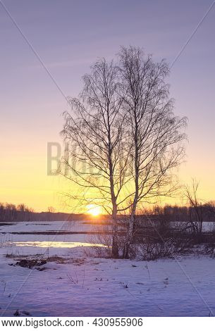 Morning In The Spring Field. A Birch Tree With Bare Branches In A Snow-covered Field Against The Bac