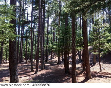 Forest Of Ushu Valley Kalam Swat Valley