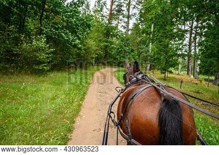 Draft Brown Horse. A Workhorse Pulls A Cart Or Wagon On A Forest Road.