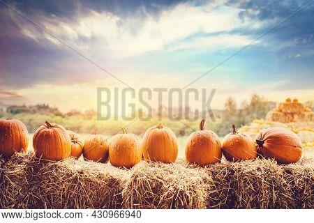 Halloween pumpkins on hay. Halloween and Thanksgiving theme