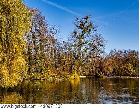 Golden Autumn View In Famous Munich Relax Place - Englischer Garten. English Garden With Fallen Leav