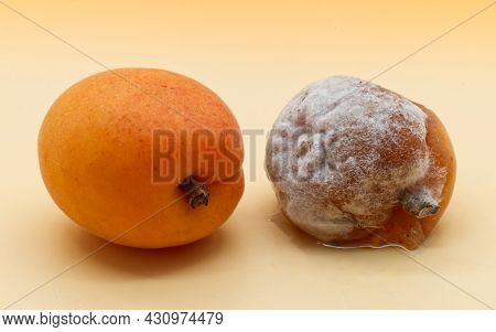 Comparison Between A Healthy Apricot And A Rotten Apricot