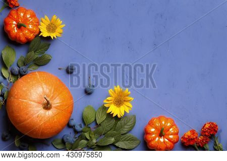 Top View Of Pumpkins, Branches Of Berries, Flowers On A Purple Background. Thanksgiving Halloween Fl