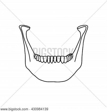 Lower Human Jaw With Teeth, Front View. Outline, Anatomical, Hand Drawn Illustration On White Backgr