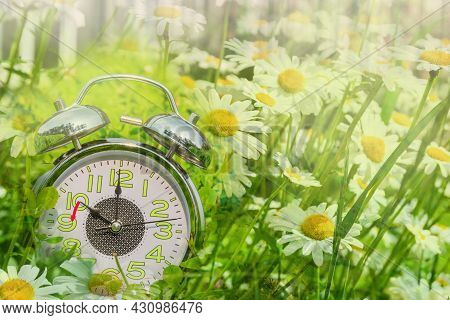 A Large Alarm Clock Lies In Green Grass With Camomiles. Daylight Saving Time Concept. Double Exposur