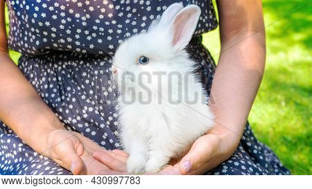 Decorative Dwarf Rabbit With Blue Eyes Close Up. Easter Bunny. A Cute Decorative Bunny In The Arms O