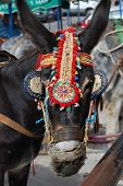 Tourist Taxi Donkey with colorful harness at Mijas. Andalusia. Spain poster