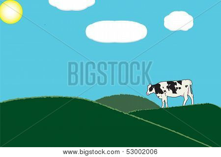 One cow in green grass pastures