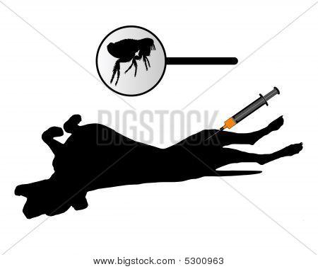 Dog Gets An Inoculation Against Fleas On White