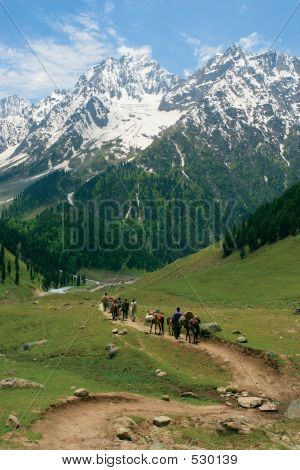 four men and four horses follow the path towards the himalayas in kashmir. poster