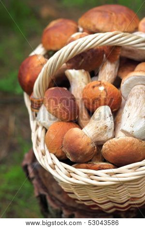Basket With White Mushrooms