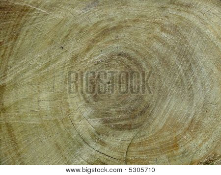 Tree trunk with some cracks. Close up wood. poster