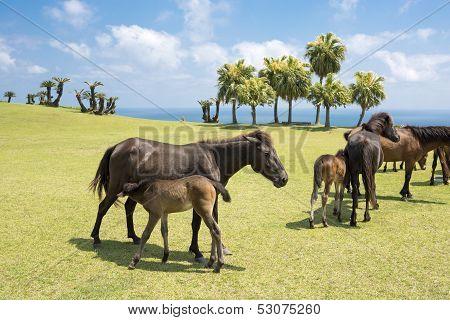Horse lactating in seashore