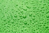 water drops on green. Raindrops. green background poster