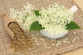 Meadowsweet herb flowers dried and fresh used in natural alternative medicine. Filipendula ulmaria. poster