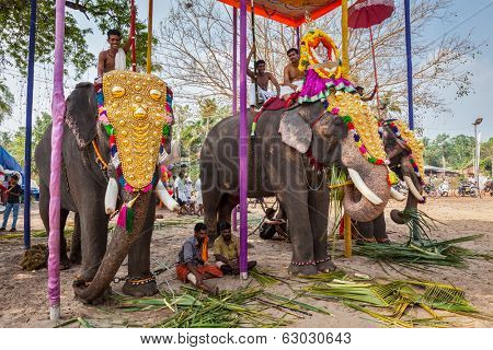 KOCHI, INDIA - FEBRUARY 24, 2013: Decorated elephants with brahmins (priests) in Hindu temple at temple festival. There about 550 domesticated elephants in Kerala state.
