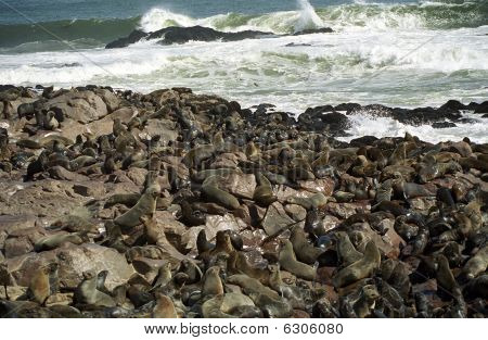 South African fur seal colony, Cape Cross, Namibia