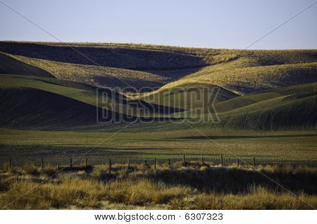 Winter Wheat On The Rolling Hills
