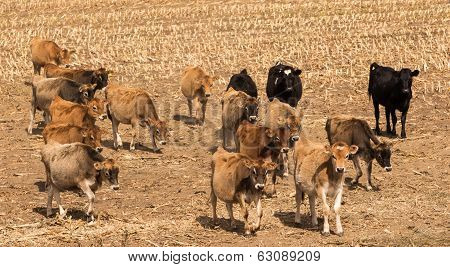 Dry Stock Feeding
